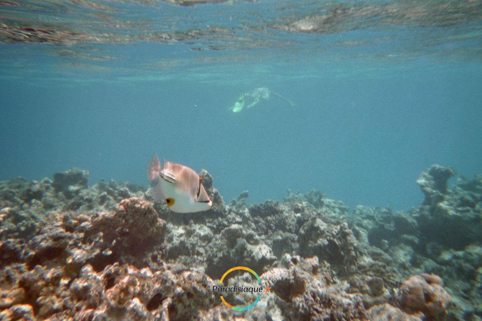 Voyage Egypte Hurghada